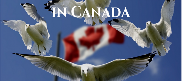 13 Top Literary Agents in Canada