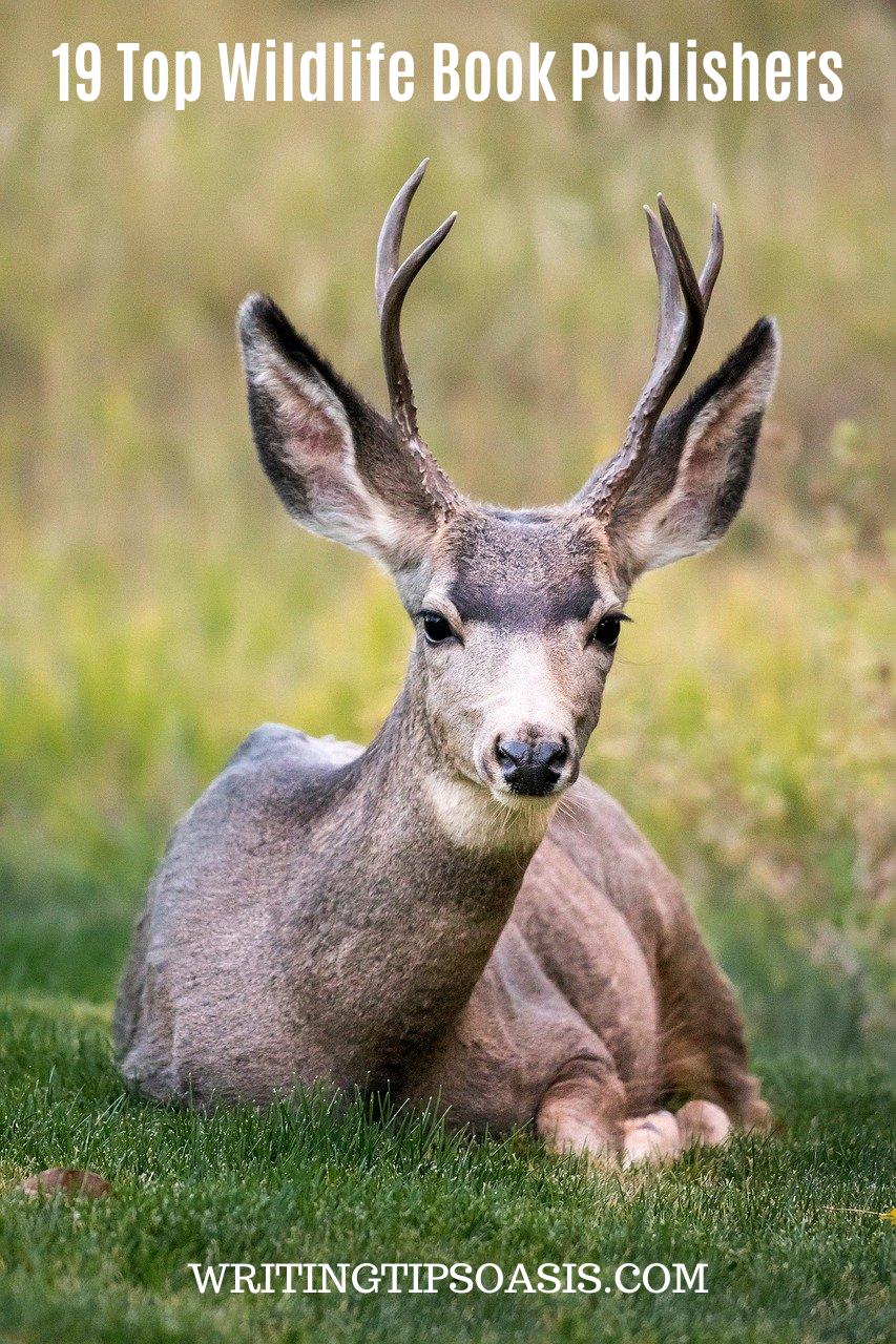Wildlife Book Publishers